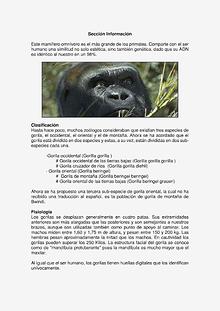 Gorila de ODZALA