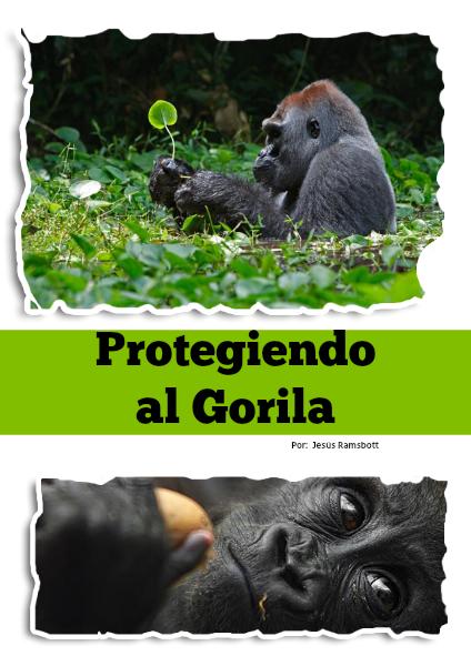Protegiendo a los Gorilas de Odzala MAYO 2014