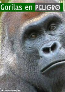Gorilas en peligro GORILAS EN PELIGRO