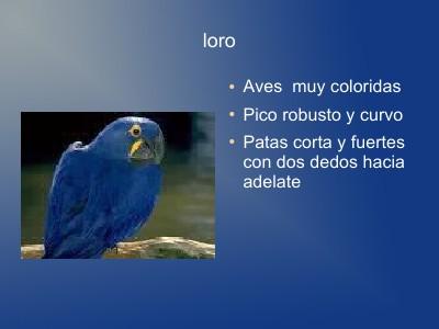 Enciclopedia de Animales Diciembre 2012