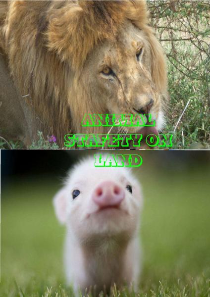 Animal Safety On Land June 2014
