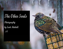 The Other Souls - Photography of Scott Mitchell
