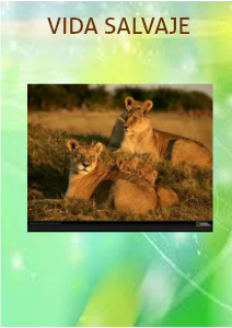 LIONS AND THEIR ENVIRONMENT Diciembre 2012