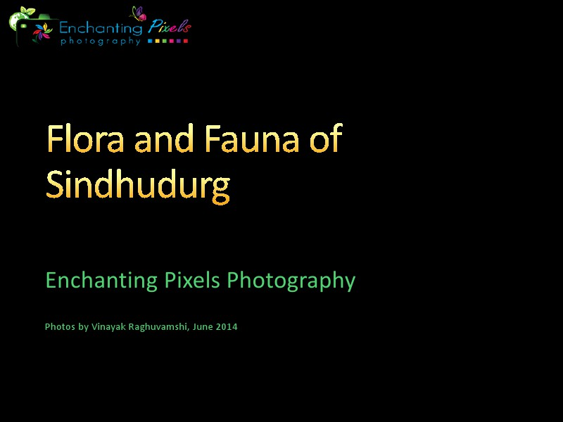 Flora and Fauna of Tropical rainforests in Sindhudurg Oct. 2014