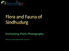 Flora and Fauna of Tropical rainforests in Sindhudurg