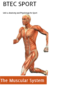 Unit 4: Anatomy and Physiology for Sport  Assignment 2  - The Muscular System