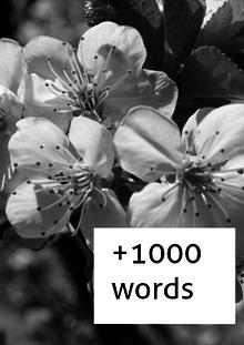 +1000 Words