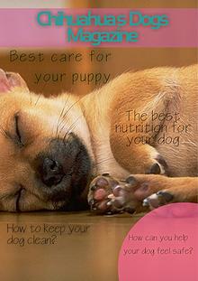 Chihuahua Magazine