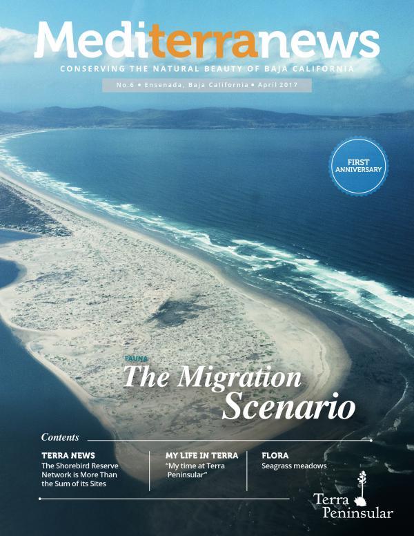 Mediterranews (English) APRIL 2017