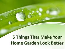 5 things that make your home garden look better