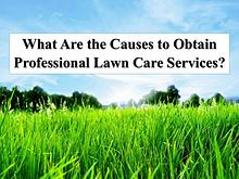 What Are the Causes to Obtain Professional Lawn Care Services?