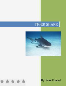 Tiger shark 2013
