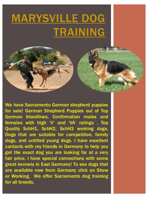 Marysville German Shepherd Breeder