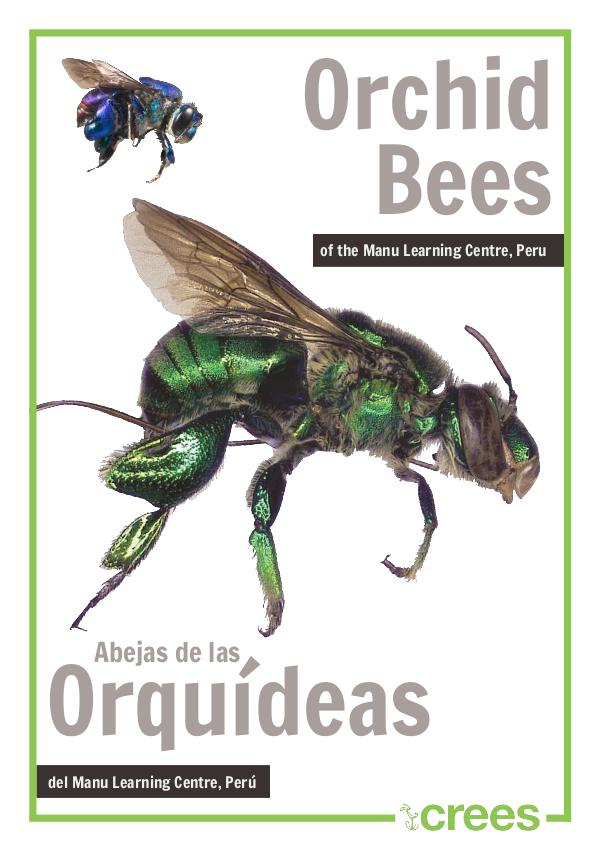 Crees Foundation - Orquid Bee Guide of Manu Learning Centre. orchid-bee-guide Crees Foundation