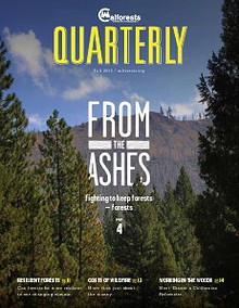 Calforests Quarterly 2013