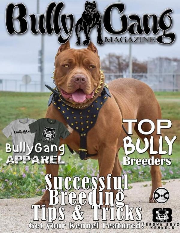 Bully Gang Magazine Edition 1