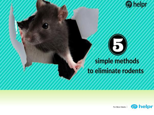 5 simple methods to eliminate rodents from your home 5 simple methods to eliminate rodents from your ho