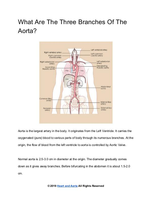 Branches Of The Aorta