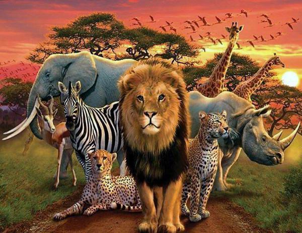 phyla del reino Animalia catalogo