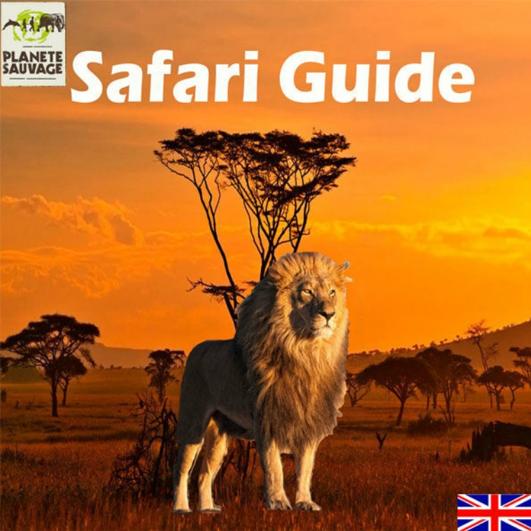English guide 20 pages