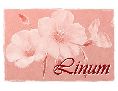 Catálogo Linum Sep-Dic 2013