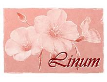 Catálogo Linum