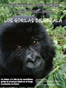 Gorilas en peligro