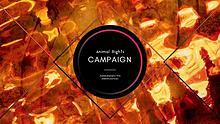AR Campaign